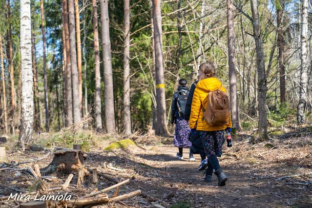 Kaksi naista kävelee metsäpolulla hakattujen puiden vieressä