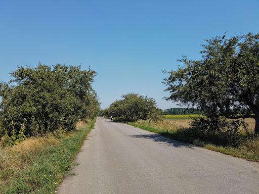 Райполе. Дорога к селу. Яблони и груши