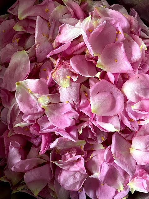 Rosenblätter Damastener Rosen