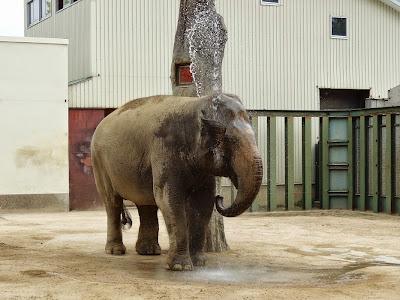 神戸市立王子動物園 ゾウ