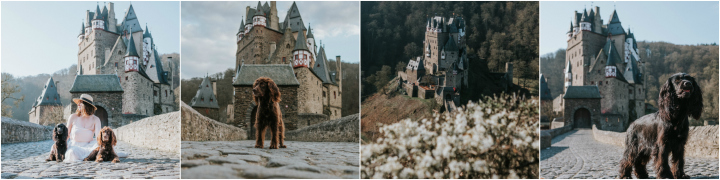 Travelling Around Europe with Dogs