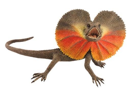 Frill Necked Lizard