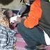Mendengar anak perempuannya di perkosa, Pria paruh baya ngamuk bunuh pasangan pasutri