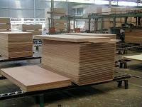 investasi kayu jabon