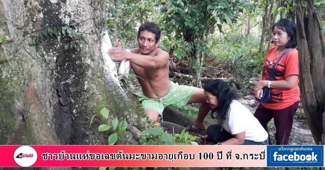 คลิป-ชาวบ้านแห่ขอเลขเด็ดต้นมะขามอายุเกือบ 100 ปี ที่ จ.กระบี่