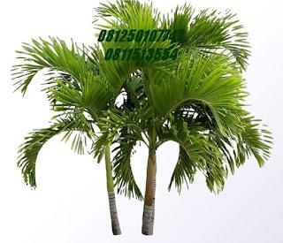 palm putri jasa tukang taman surabaya