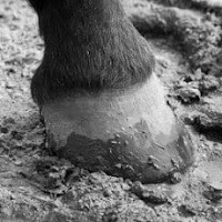 A Quick Guide to Common Hoof Problems and Solutions