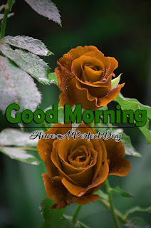 New Good Morning 4k Full HD Images Download For Daily%2B68