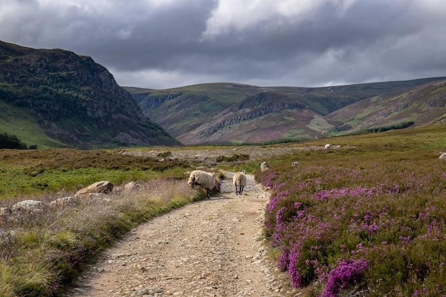 Pięć ulubionych miejsc w Szkocji.
