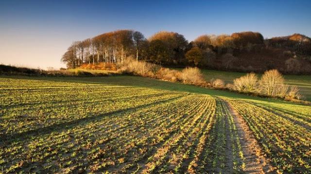 Αγρότες-φαντάσματα λυμαίνονται τα ευρωπαϊκά κονδύλια για τη γεωργία