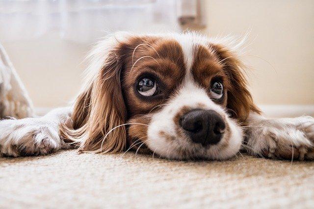 Communiqué : « Festival de la viande de chien à Yulin : la cruauté sans limite ! »