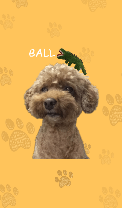 My cute Poodle_Ball