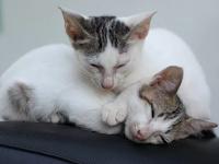 Inilah 9 Penyakit Kucing Yang Mematikan dan Dapat Menyerang Manusia