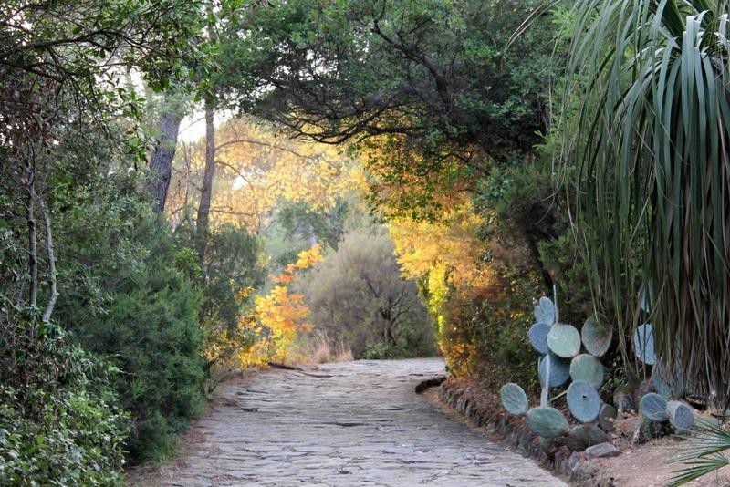 Jardín de América subtropical. Jardin des mediterranees (Domaine du Rayol) diseño: Gilles Clement