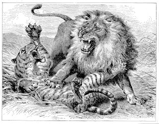 lion tiger antique illustration download stock image