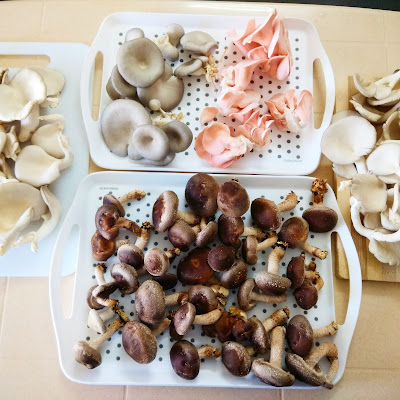 How can I start mushroom farming in a 500 sq ft area?