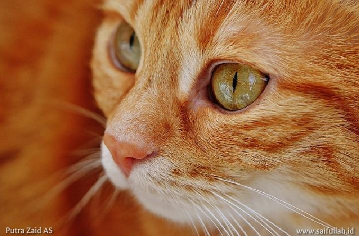Kucing dan Kedudukannya dalam Pandangan Islam