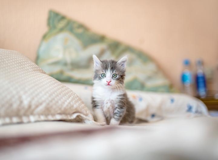 Petua Elak Kucing Berak Merata-Rata