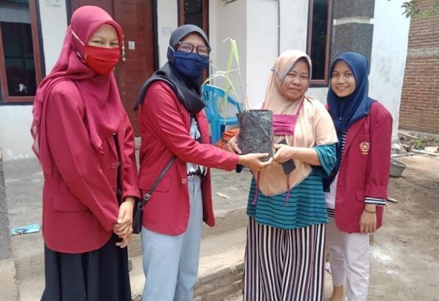 KKN di Sape, Tiga Mahasiswi Unmuh Malang Bagikan Bibit Tanaman Apotik Hidup