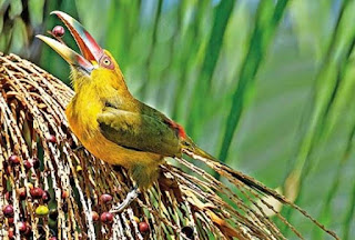 Curso no Vale do Ribeira ensinará criar inovações inspiradas na natureza por meio da biomimética