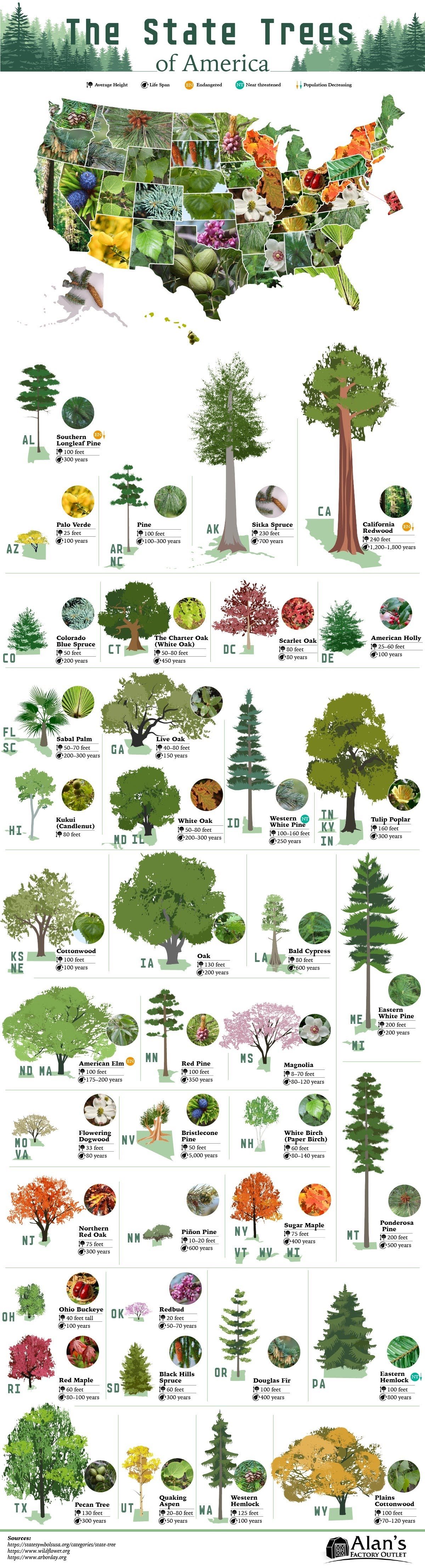 The State Trees of America #infographic