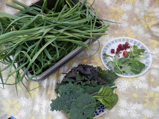 My homegrown harvest, June 2019.  from UK garden blogger secondhandsusie.blogspot.com #homegrownharvest #suburbanharvest #growyourown