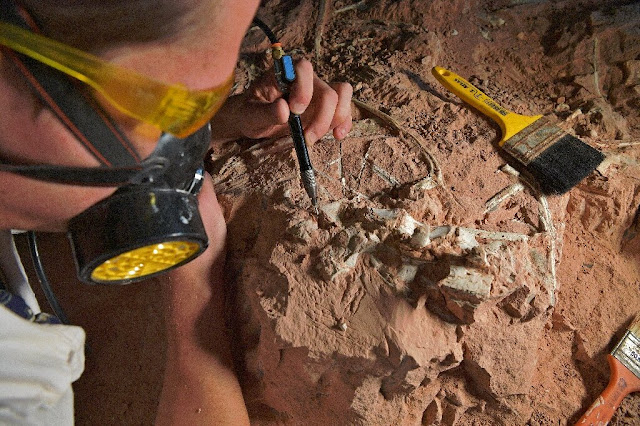 In Brazil's pampas, a Triassic Park once flourished