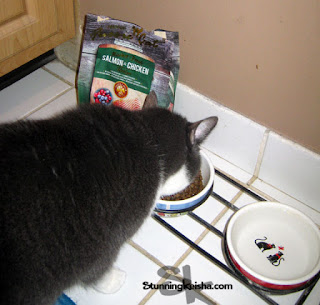 Why Does TW Hate This New Cat Food? #ChewyInfluencer
