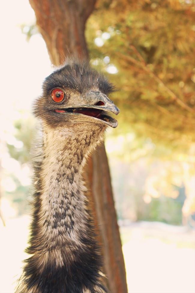 Madrid: Tierpark Faunia
