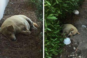 Восьмилетняя собака поселилась на стоянке после того, как ее предали бывшие владельцы!