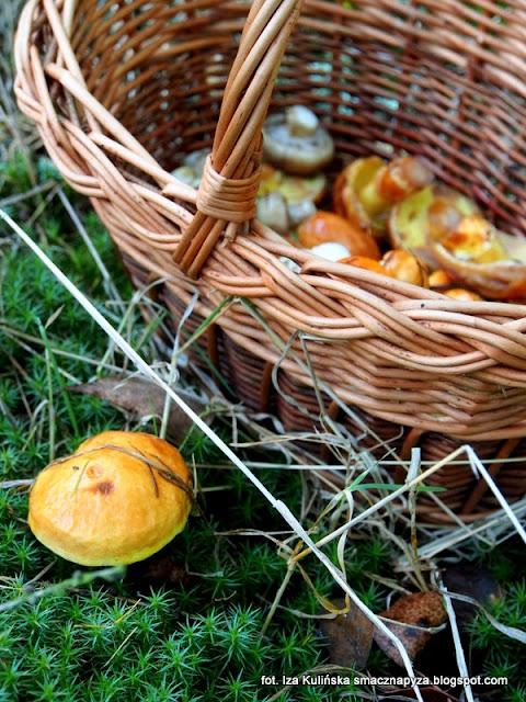 grzyby gatunkami, grzyby jadalne, atlas grzybow, grzybobranie, na grzyby