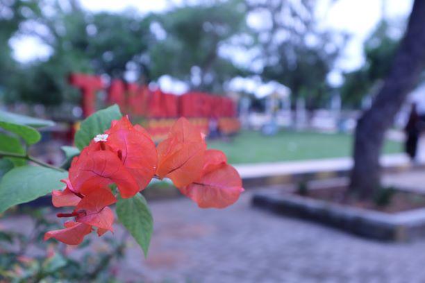 hasil foto mode auto lensa kit Canon EOS M50