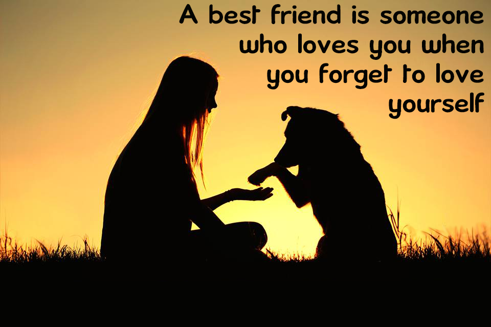 A Dog Is A Man S Best Friend Meaning