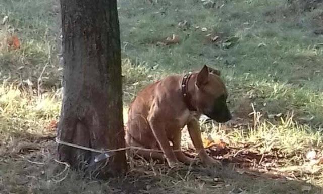 Верность и предательство! В парке обнаружили собаку привязанную к дереву, а рядом была записка