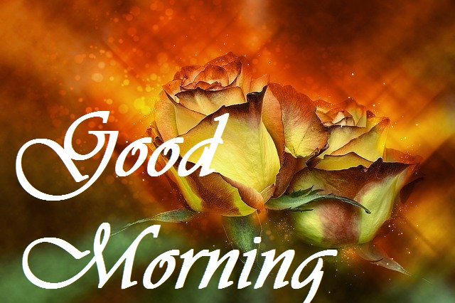 good morning Beautiful yellow rose image