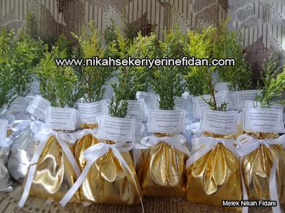 Eskişehir nikah çamı fidanı Fatmagül Alican 4