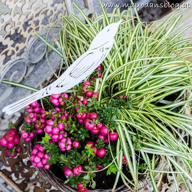 Blumenkästen im Herbst