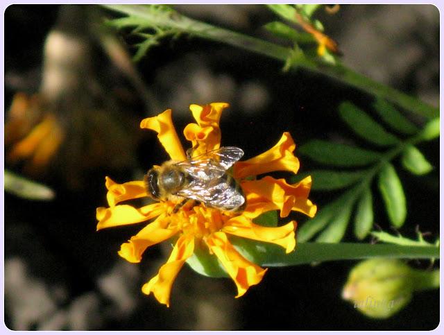 цветы садовые дачные