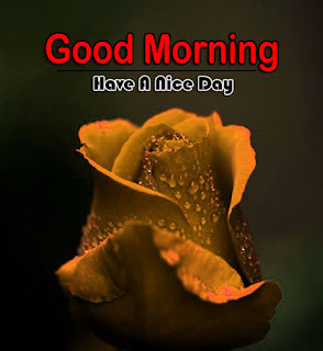 New Good Morning 4k Full HD Images Download For Daily%2B105