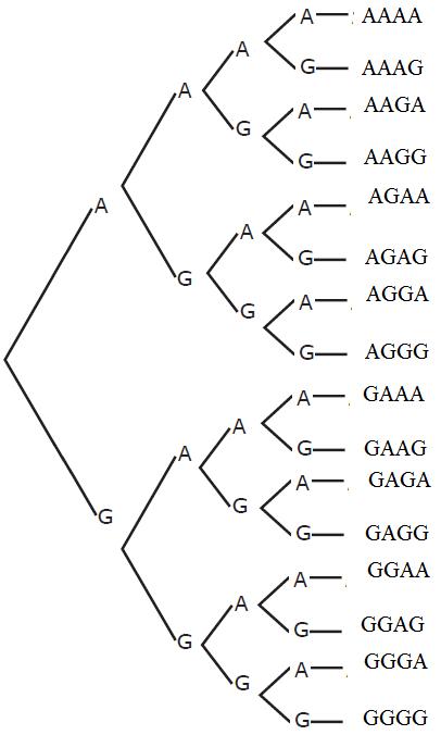 Cara menentukan ruang sampel suatu kejadian untuk mempermudah penentuan ruang sampel pelemparan empat keping uang koin sekaligus dapat digunakan diagram pohon yakni seperti gambar di bawah ini ccuart Image collections