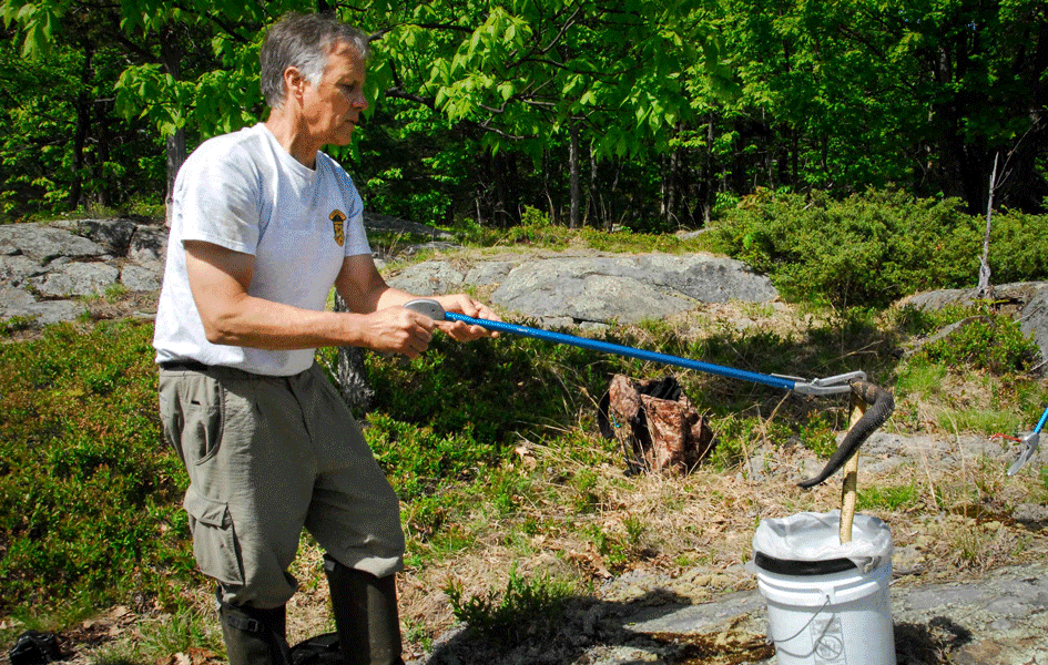 Come learn about vermont s rattlesnakes in rutland on march 8 for Vermont fish and wildlife