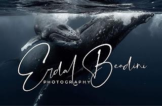 sualtı deniz fotoğrafçı logo örnekleri