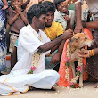 Greater Kashmir Seven-year-old boy forced to marry dog to ward off evil spirits in Jharkhand