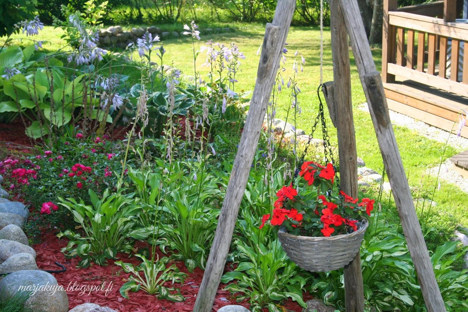 Kukkamaa heinäseiväs kesä piha puutarha