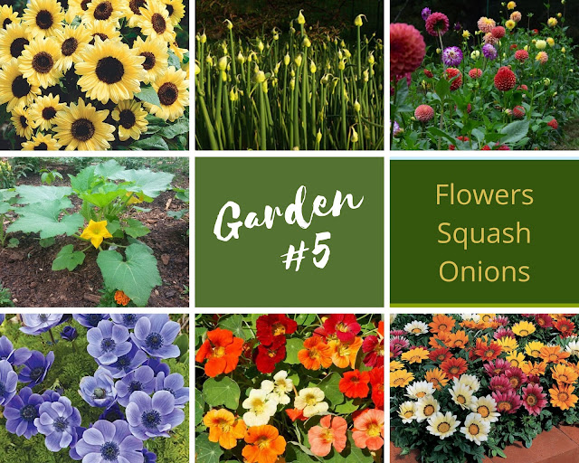 Rock-n-Zen Garden Plot #5 plants identification.