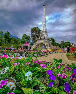 Harga tiket masuk taman bunga celosia bandungan, lokasi taman bunga Celosia, tempat wisata hits semarang