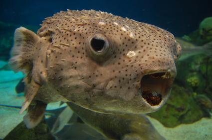 albuquerque aquarium, aquarium albuquerque