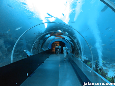 Wisata Aquarium Terbesar Di Dunia S.E.A Aquarium Singapure