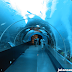 Wisata Aquarium Terbesar Di Dunia S.E.A Aquarium Singapore