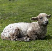 Il Buon pastore